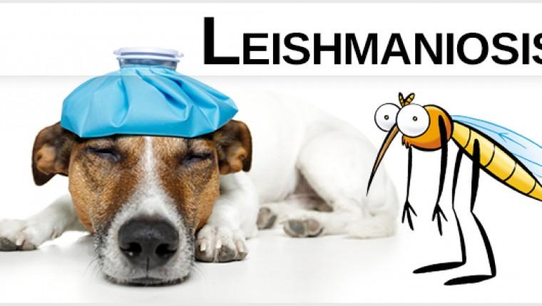 CAMPAÑA CONTROL DE LEISHMANIA