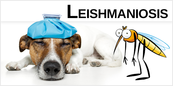 CAMPAÑA DETECCION LEISHMANIOSIS