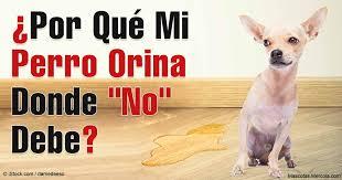 MI PERRO ORINA DONDE NO DEBE !!!!
